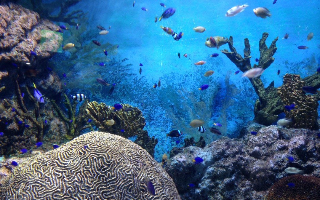 Declining rate of coral reef