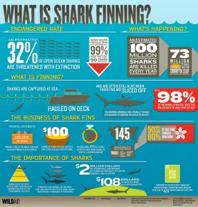 What+is+shark+finning